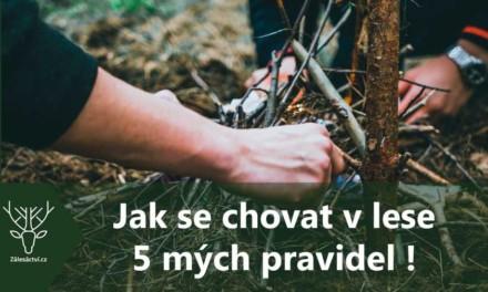 Jak se chovat v lese